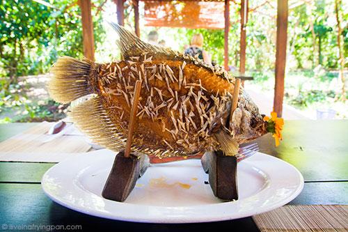 Elephant ear fish - Uttinh Guest House - Mekong Delta - Vietnam