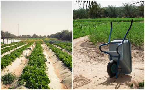 Greenheart Organic Farms - Dubai / Fujairah - © Airspectiv Media